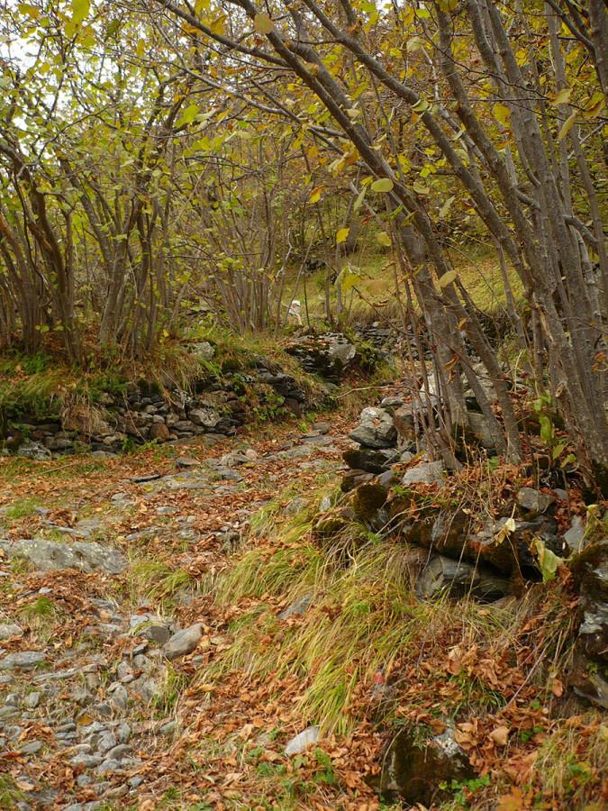 Sortida Guiada La Vall De Riqüerna